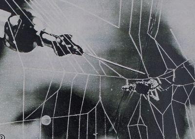 1955-Berauschte-3