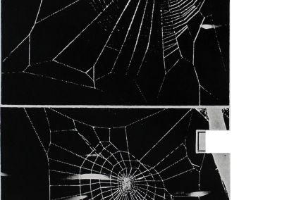 1955-Ein-Spinne-2