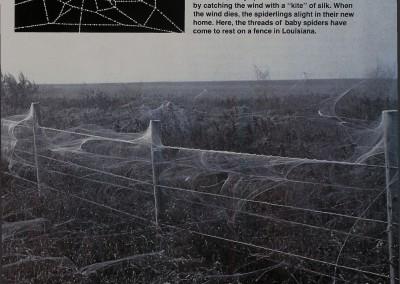 1980-Life-on-a-Silken-Thread-2