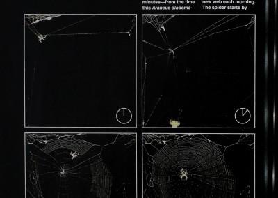 1980-Life-on-a-Silken-Thread-5