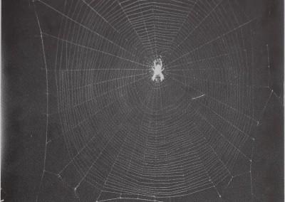 1977-SpiderWebBuilding-1