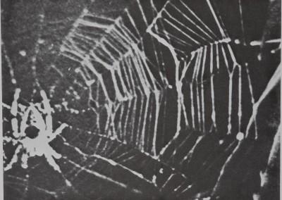 1977-SpiderWebBuilding-5