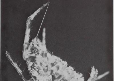 1977-SpiderWebBuilding-6