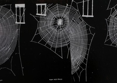 1978-Unraveling-the-Top-Arachnid-3