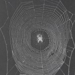 Quantitative Analysis of Orb Web Patterns in Four Species of Spiders  Behavior Genetics