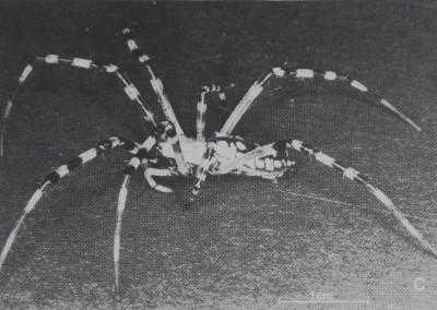 1977-QuantitativeAnalysisOfOrb-3