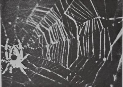 1977-SpiderWebBuilding-5