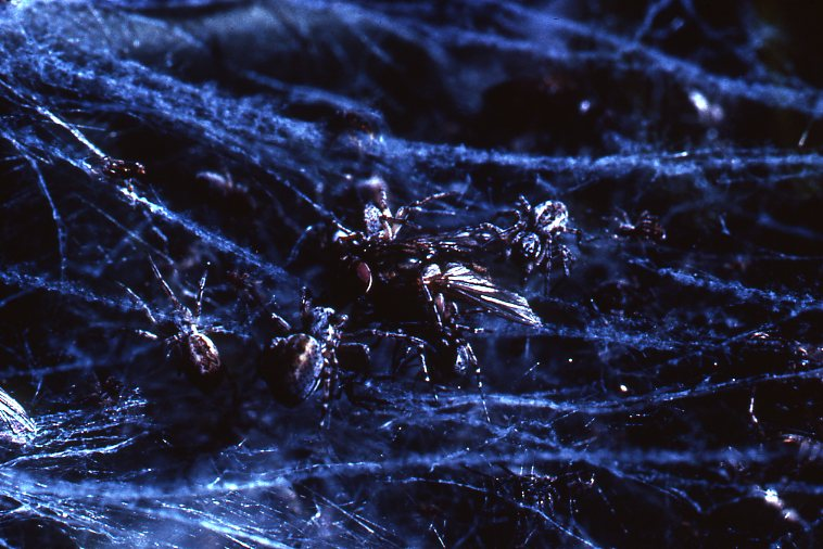 Dr. Peter N Witt - Spider Gallery -